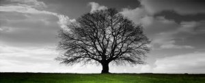 time2stand tree